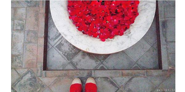 rond-roses4.jpg