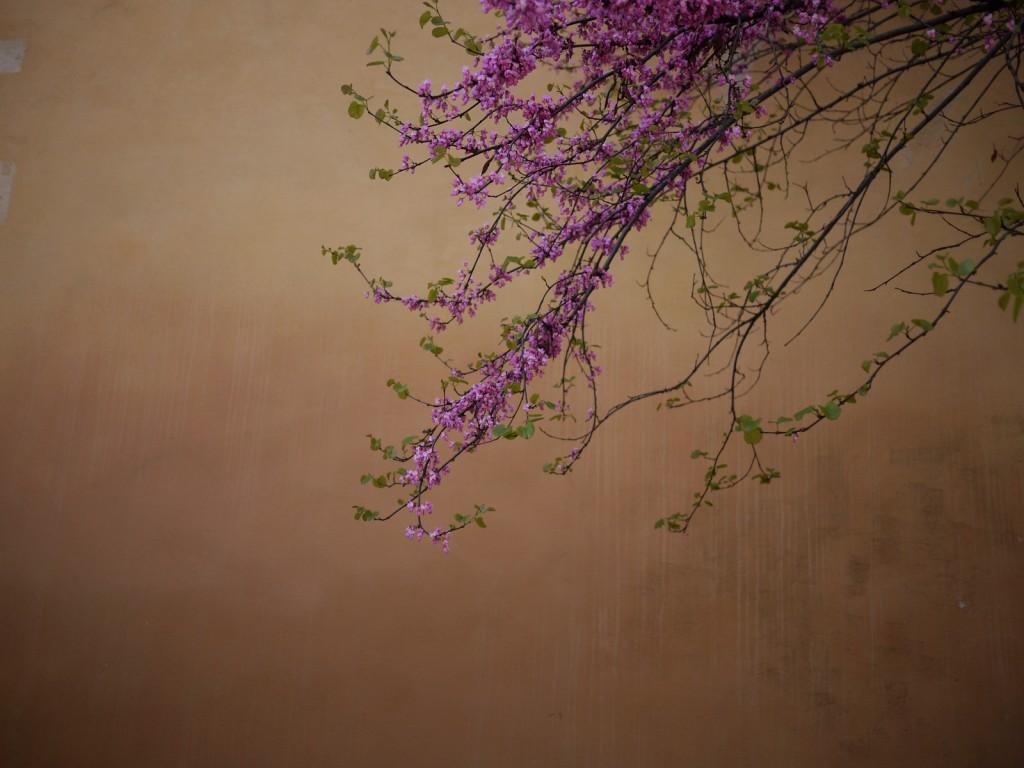 myriam-balay-couleur