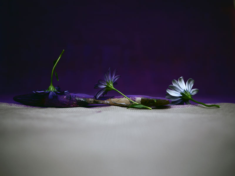 myriam-balay-purple6