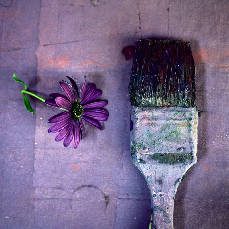 myriam-balay-purple7
